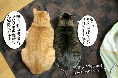 白にゃんずと名古屋国際女子マラソン_d0355333_16420734.jpg
