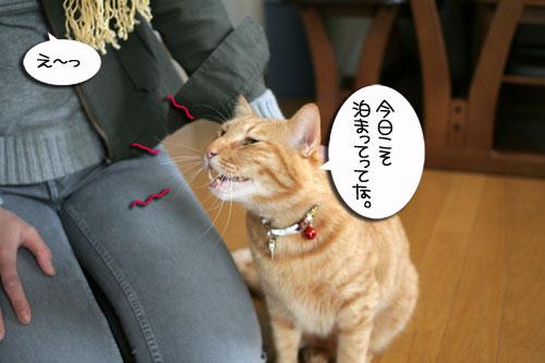 松野議員の講演会に行ってきました_d0355333_16432763.jpg