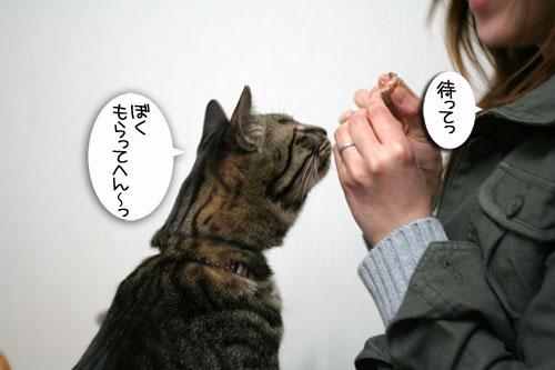 松野議員の講演会に行ってきました_d0355333_16432892.jpg