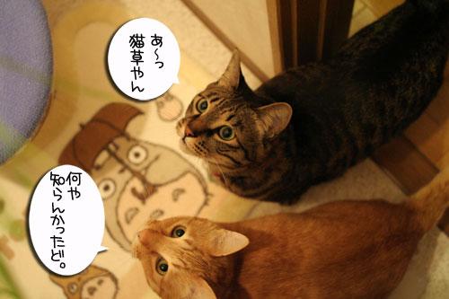 猫草フィーバー!_d0355333_16432903.jpg