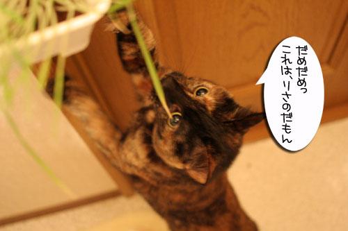 猫草フィーバー!_d0355333_16432916.jpg