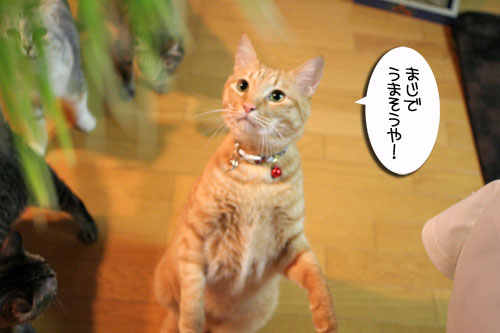 猫草フィーバー!_d0355333_16433032.jpg