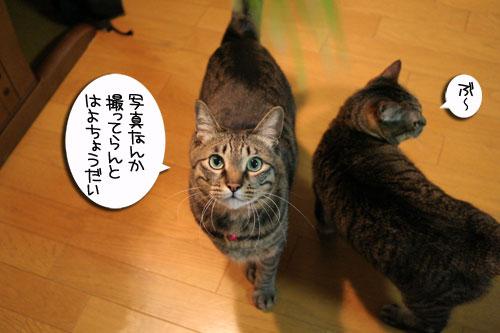 猫草フィーバー!_d0355333_16433069.jpg
