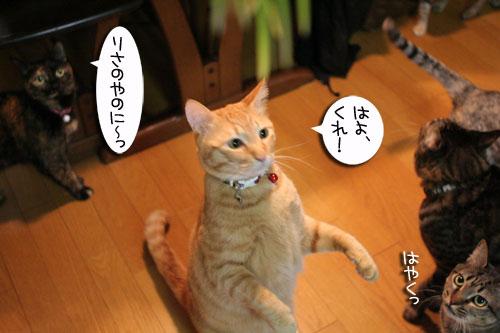猫草フィーバー!_d0355333_16433085.jpg