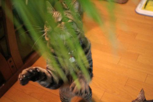 猫草フィーバー!_d0355333_16433131.jpg