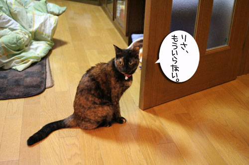 猫草フィーバー!_d0355333_16433230.jpg