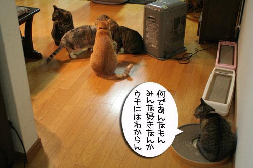 猫草で大惨事(汗_d0355333_16433805.jpg