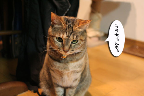 猫草で大惨事(汗_d0355333_16433835.jpg