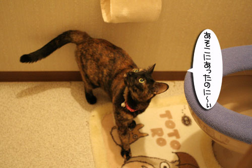 猫草で大惨事(汗_d0355333_16433927.jpg