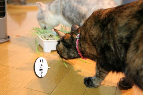 猫草で大惨事(汗_d0355333_16434018.jpg