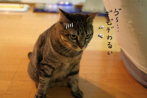 猫草で大惨事(汗_d0355333_16434130.jpg