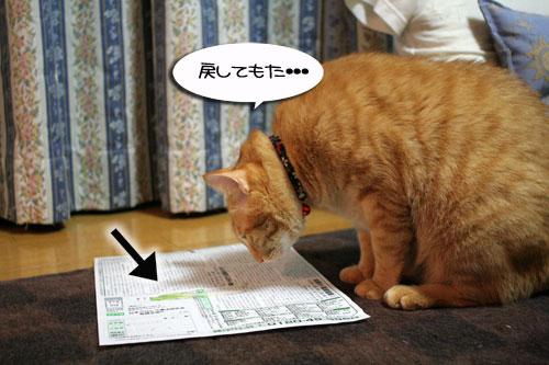 猫草で大惨事(汗_d0355333_16434210.jpg