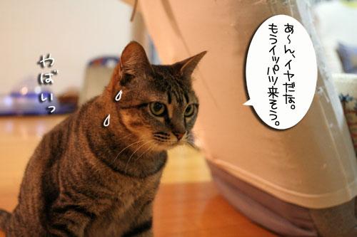 猫草で大惨事(汗_d0355333_16434289.jpg