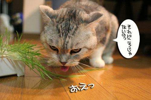 猫草で大惨事(汗_d0355333_16434387.jpg