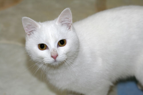 白猫スキーなアナタへ♪_d0355333_16440558.jpg