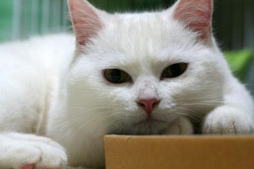 白猫スキーなアナタへ♪_d0355333_16440817.jpg