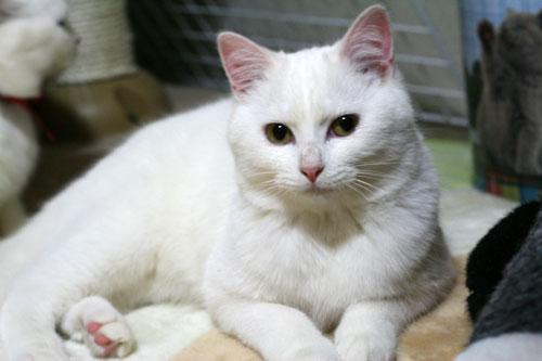 白猫スキーなアナタへ♪_d0355333_16440875.jpg