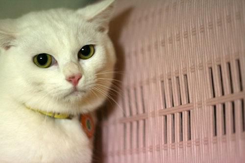白猫スキーなアナタへ♪_d0355333_16440952.jpg