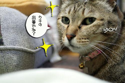 白猫スキーなアナタへ♪_d0355333_16441277.jpg