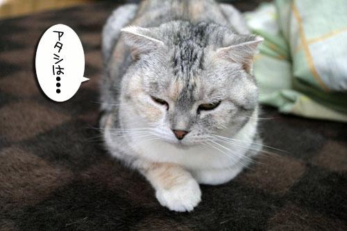白猫スキーなアナタへ♪_d0355333_16441384.jpg