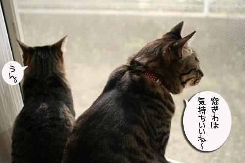 窓ぎわ族と関西猫の矜持_d0355333_16443399.jpg