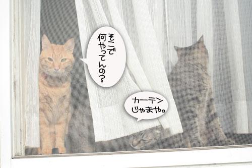 窓ぎわ族と関西猫の矜持_d0355333_16443443.jpg