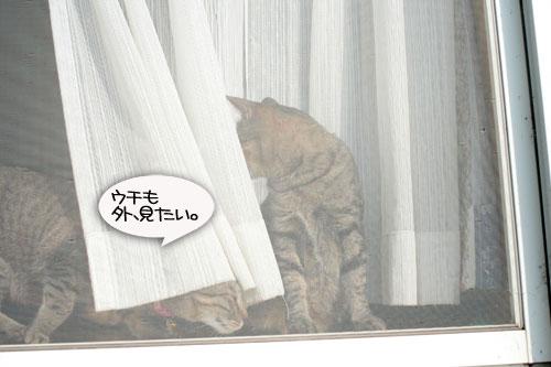 窓ぎわ族と関西猫の矜持_d0355333_16443460.jpg