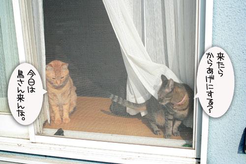 窓ぎわ族と関西猫の矜持_d0355333_16443579.jpg