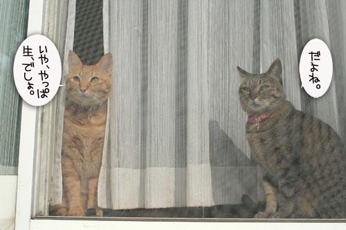 窓ぎわ族と関西猫の矜持_d0355333_16443581.jpg