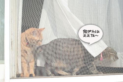 窓ぎわ族と関西猫の矜持_d0355333_16443597.jpg