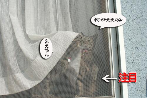 窓ぎわ族と関西猫の矜持_d0355333_16443637.jpg