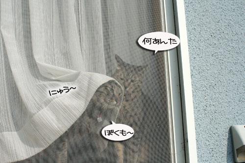 窓ぎわ族と関西猫の矜持_d0355333_16443681.jpg