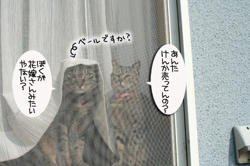 窓ぎわ族と関西猫の矜持_d0355333_16443704.jpg