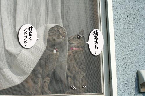 窓ぎわ族と関西猫の矜持_d0355333_16443762.jpg