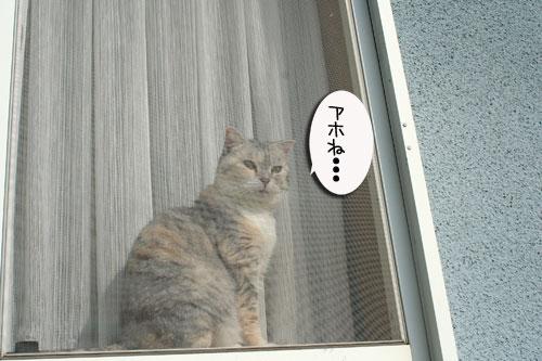 窓ぎわ族と関西猫の矜持_d0355333_16443803.jpg