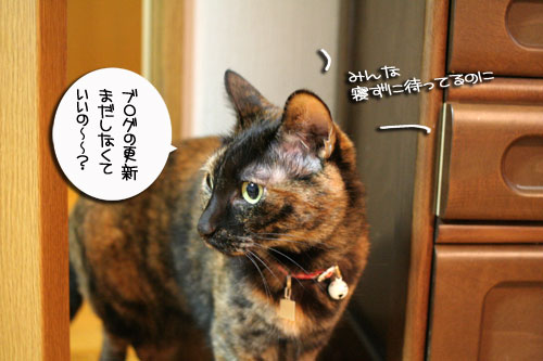 入っちゃダメぇっ!_d0355333_16480597.jpg
