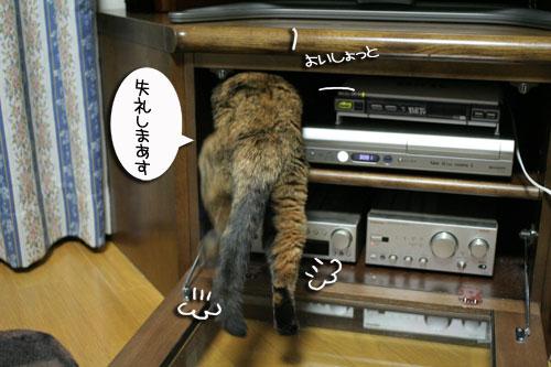 入っちゃダメぇっ!_d0355333_16480688.jpg