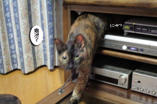 入っちゃダメぇっ!_d0355333_16480850.jpg