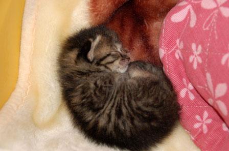 赤ちゃん猫★体重増えたよ!_d0355333_16484561.jpg