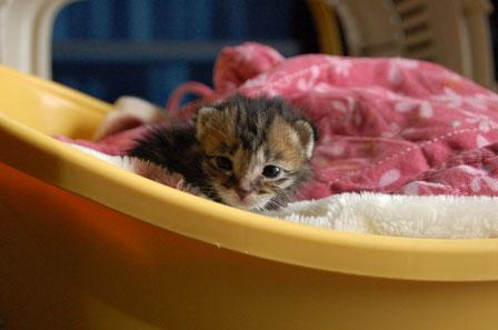 赤ちゃん猫★体重増えたよ!_d0355333_16484591.jpg