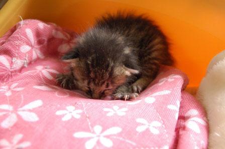 赤ちゃん猫★体重増えたよ!_d0355333_16484650.jpg
