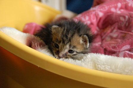 赤ちゃん猫★体重増えたよ!_d0355333_16484682.jpg