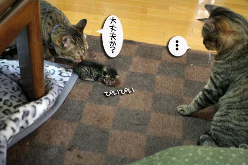 赤ちゃん猫★体重増えたよ!_d0355333_16484727.jpg