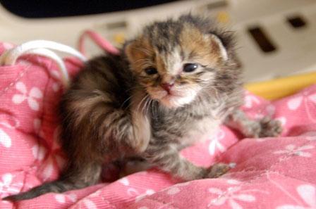 赤ちゃん猫★体重増えたよ!_d0355333_16484732.jpg