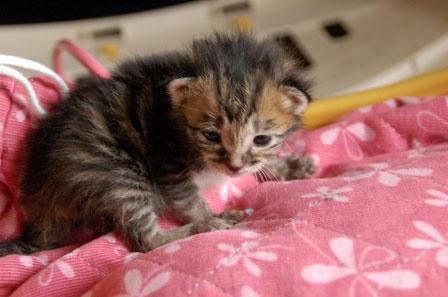 赤ちゃん猫★体重増えたよ!_d0355333_16484773.jpg