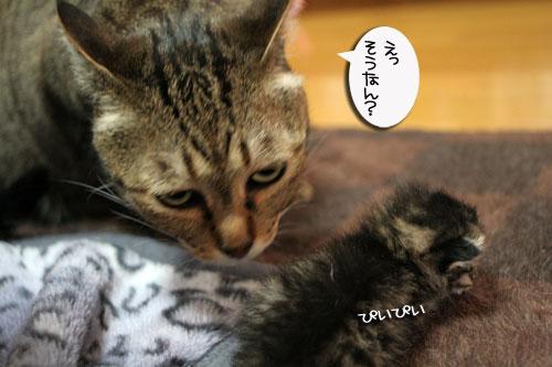 赤ちゃん猫★体重増えたよ!_d0355333_16484833.jpg