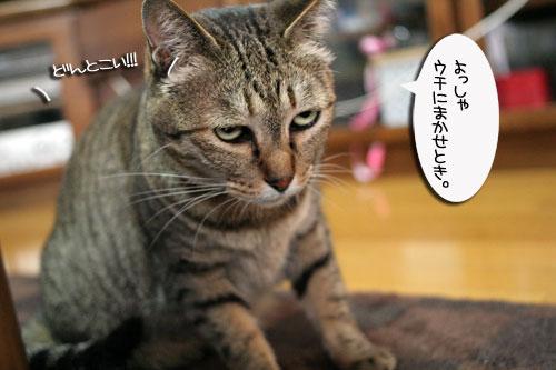 赤ちゃん猫★体重増えたよ!_d0355333_16484908.jpg