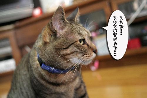 赤ちゃん猫★体重増えたよ!_d0355333_16484986.jpg