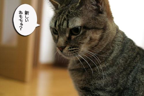 赤ちゃん猫★体重増えたよ!_d0355333_16485021.jpg