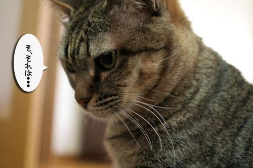赤ちゃん猫★体重増えたよ!_d0355333_16485025.jpg